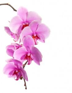 die farbe des jahres 2014 radiant orchid welt der edelsteine. Black Bedroom Furniture Sets. Home Design Ideas