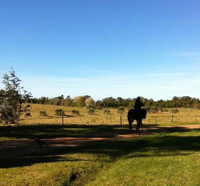 Erkundung der Pampa zu Pferd